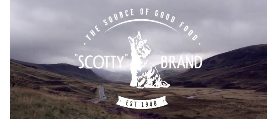 Scotty Brand - Bogdan Ciocoiu