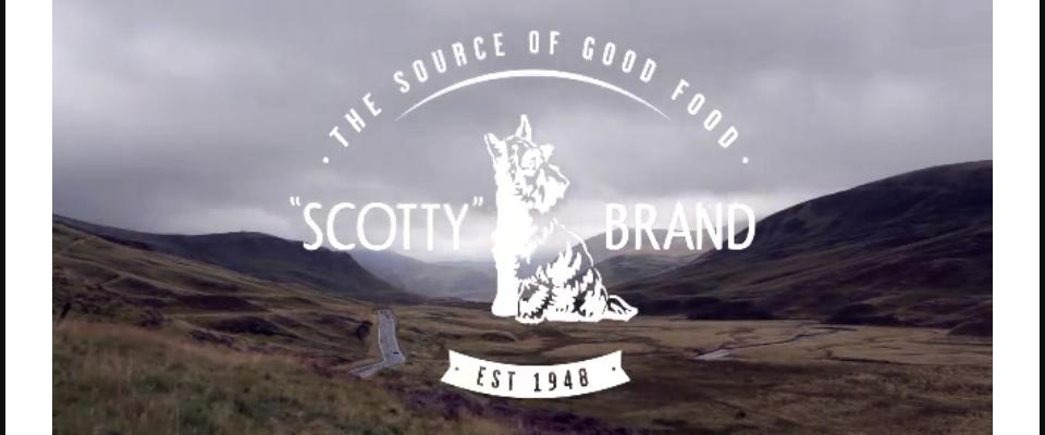 Scotty Brand – Bogdan Ciocoiu